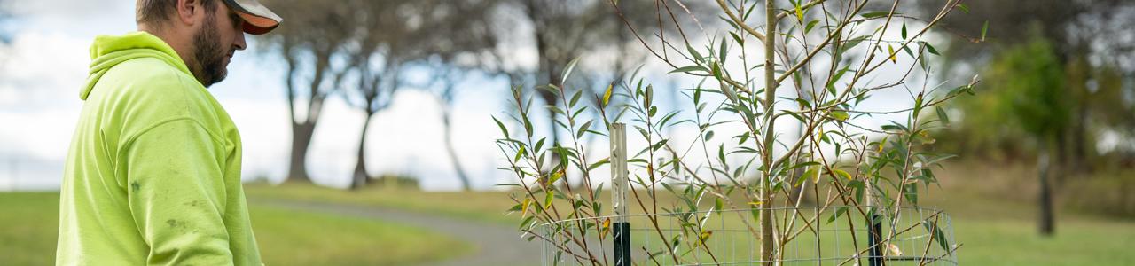 Worker watering tree